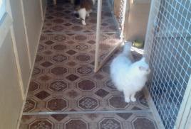 Проживание двух кошек в одном номере