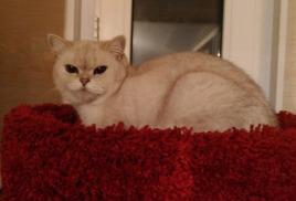 любые вопросы по проживанию вашей кошки (кота) задавайте по адресу info@cats-dog-house.ru